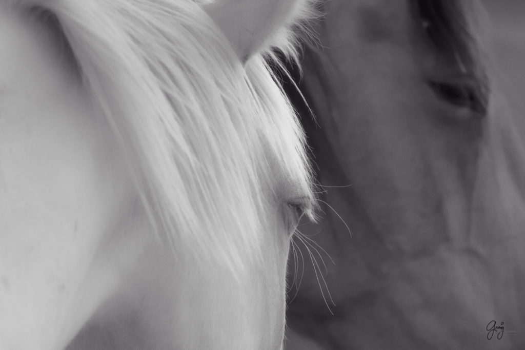 fine art photography of blue eyed mare  black and white