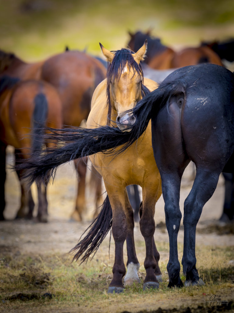 wild horses standing by watering hole peaceful