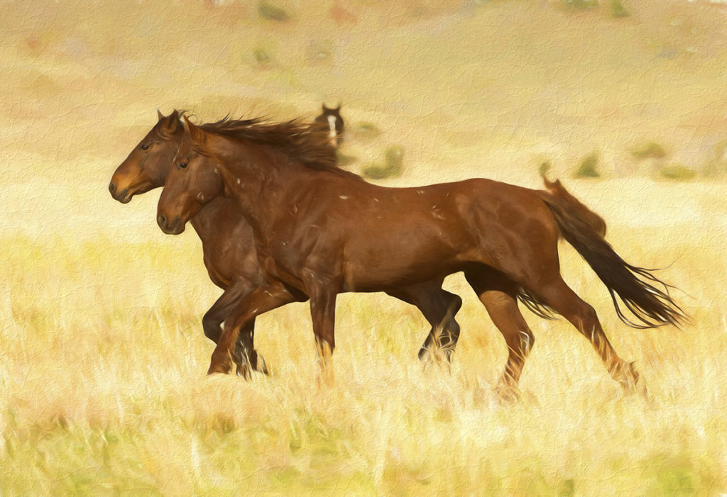 photograph painting of two wild horse stallions on the run, fine art photography of wild horses