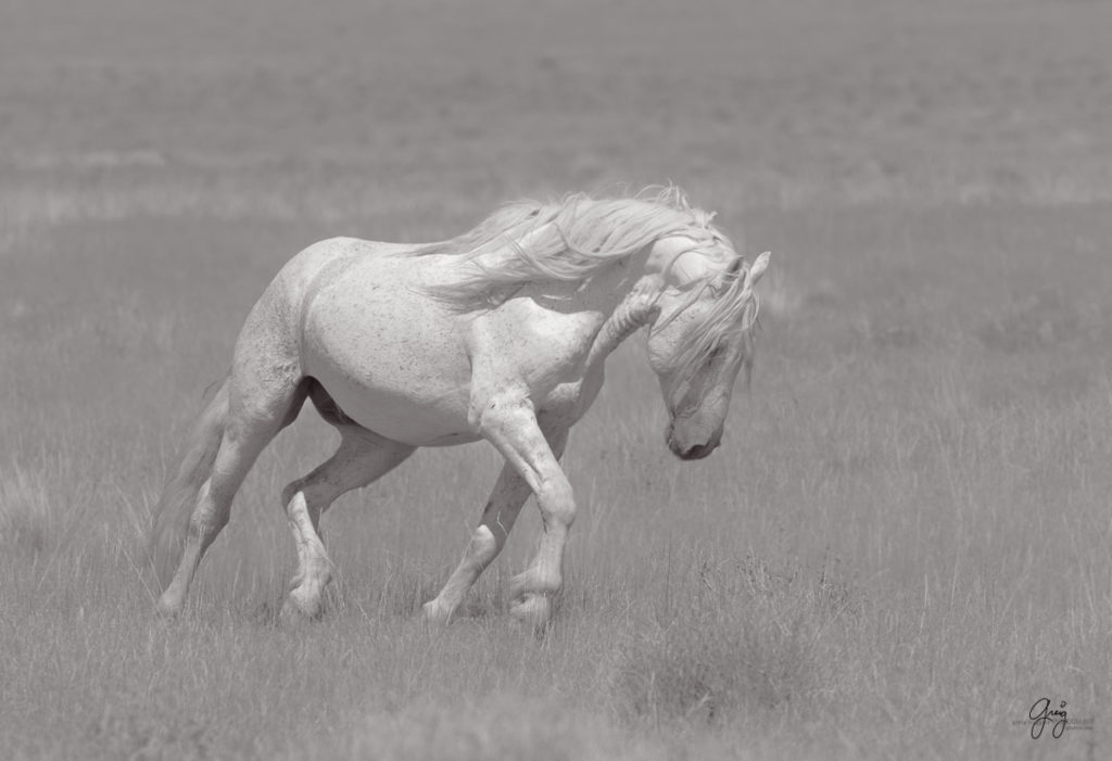 Black and white photography of wild horses horse photography fine art photography of horses