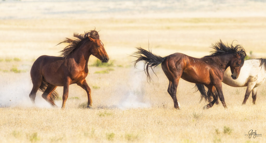 Horses photography horse photography wild horse photography horses art pictures of horses