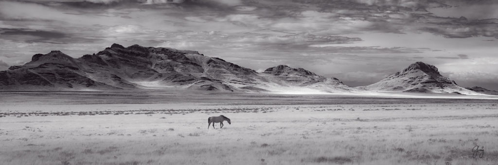 photograph of Single wild horse with panorama of Utah's West desert in background