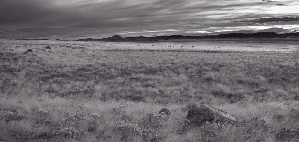 Black and White Panorama of Utah's West desert with wild horse herd in the distance