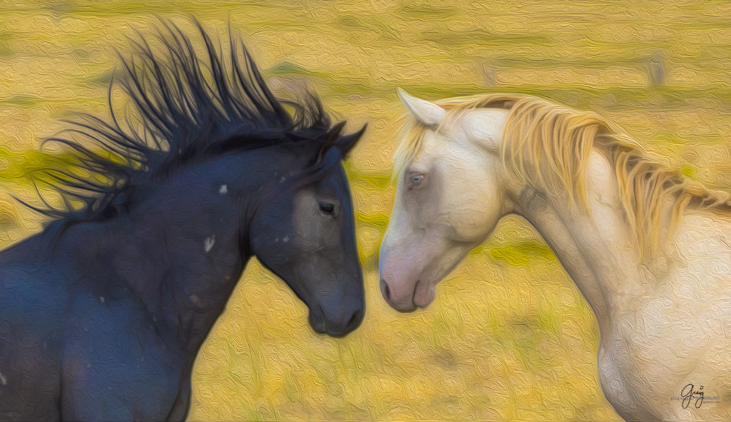Stylized photograph of black and white stallions