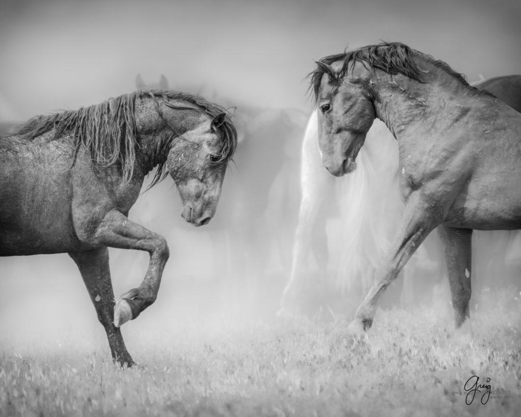 Rabid Horses In Germany! - 900×720