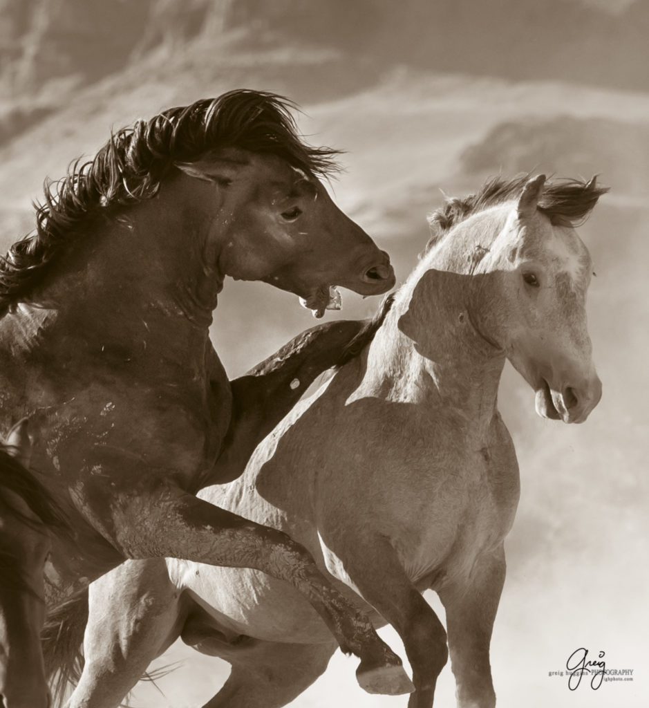 Rabid Horses In Germany! - HD939×1024