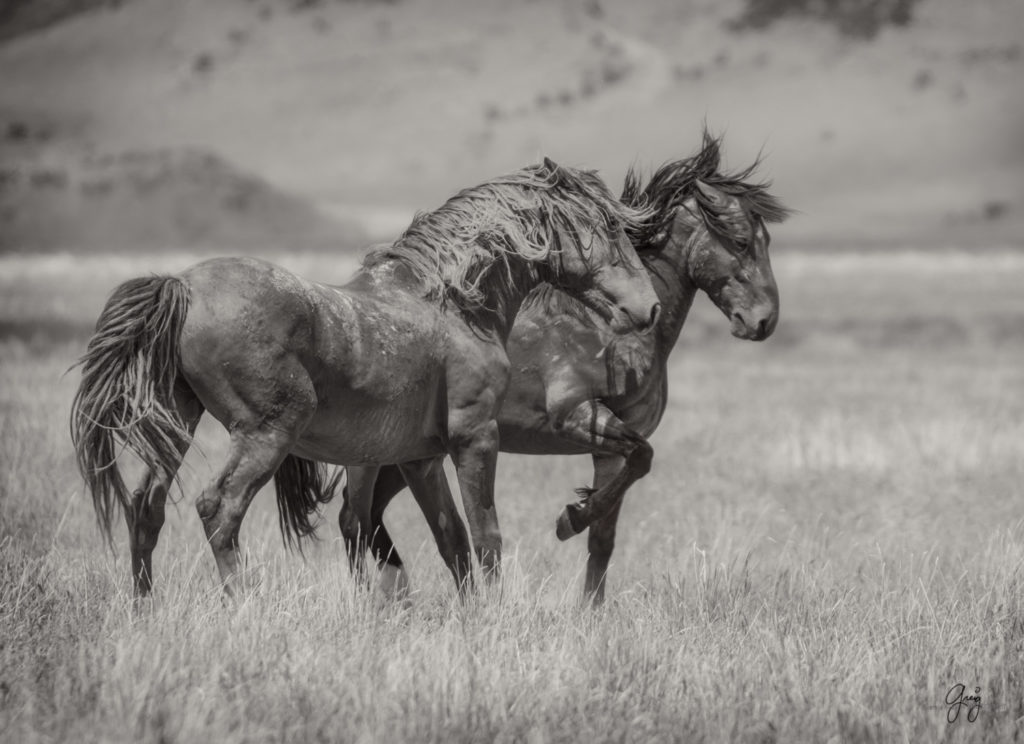 Fine Art Photographs of Wild Horses - Photography of Wild ...