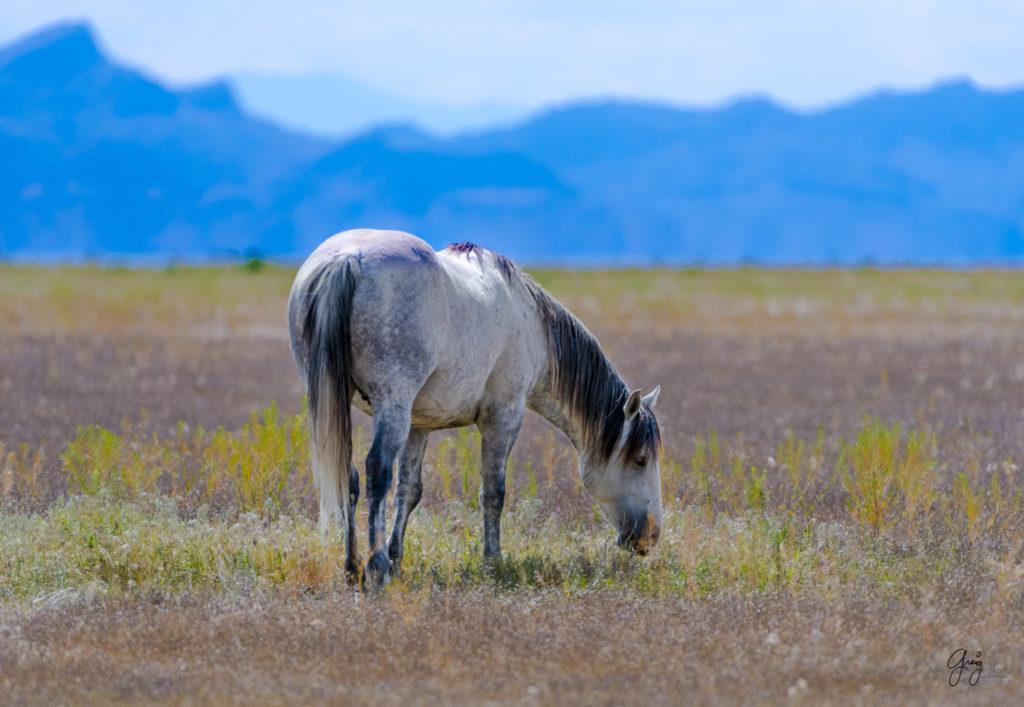 Photographs of Onaqui Herd Wild Horses – May 2017 ...