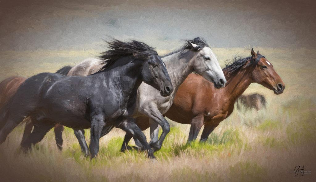 Photography Of Wild Horses Running Photography Of Wild Horses Onaqui Herd