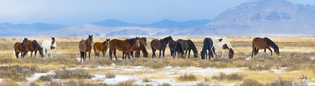 wild horses, wild horse photography, fine art photography, fine art photography of wild horses, onaqui herd, onaqui herd wild horses, utahwildhorses, utha wild horses